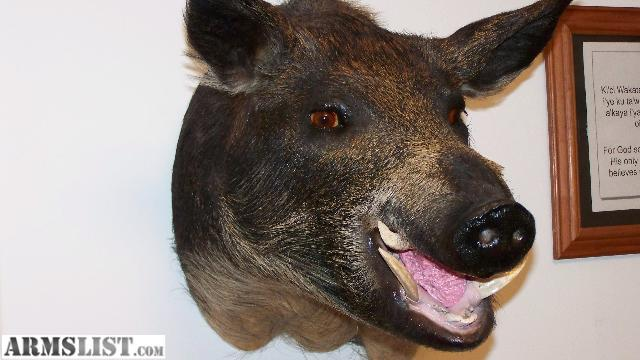 Armslist for sale trade wild boar head for Decor international middletown oh
