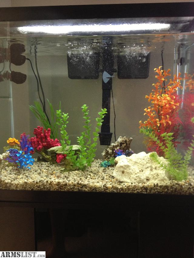 What you need for a 10 gallon fish tank 2017 fish tank for What do you need for a fish tank
