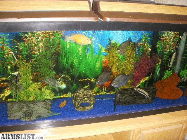 Armslist for sale 55 gallon fish tank with stand for 15 gallon fish tank stand