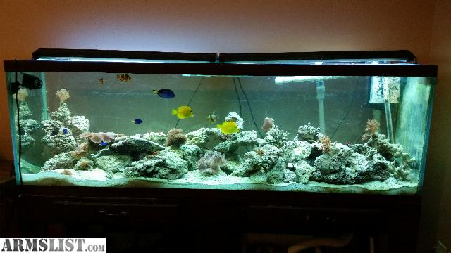 For Sale/Trade: 125 Gallon Saltwater Tank complete and loaded!!!!!